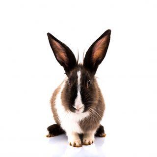 Мясо кролика по низким ценам в Озерном