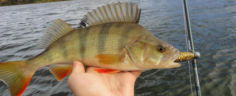 Рыбалка на окуня, что нужно знать?