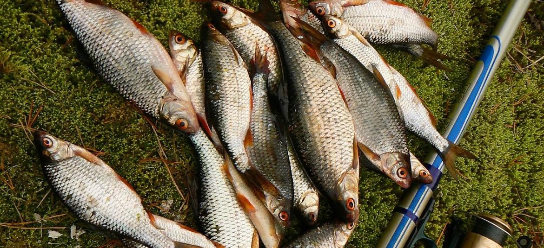 Лучшая зимняя рыбалка в Калужской области