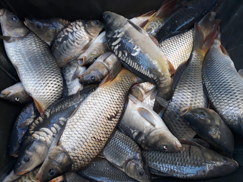 Рыбалка на карпа в калужской области