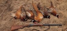 Акция на охоту на фазана